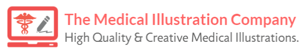 The Medical Illustration Company